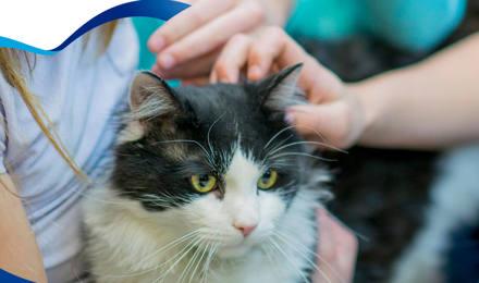 Cómo lidiar con la alergia a gatos y perros
