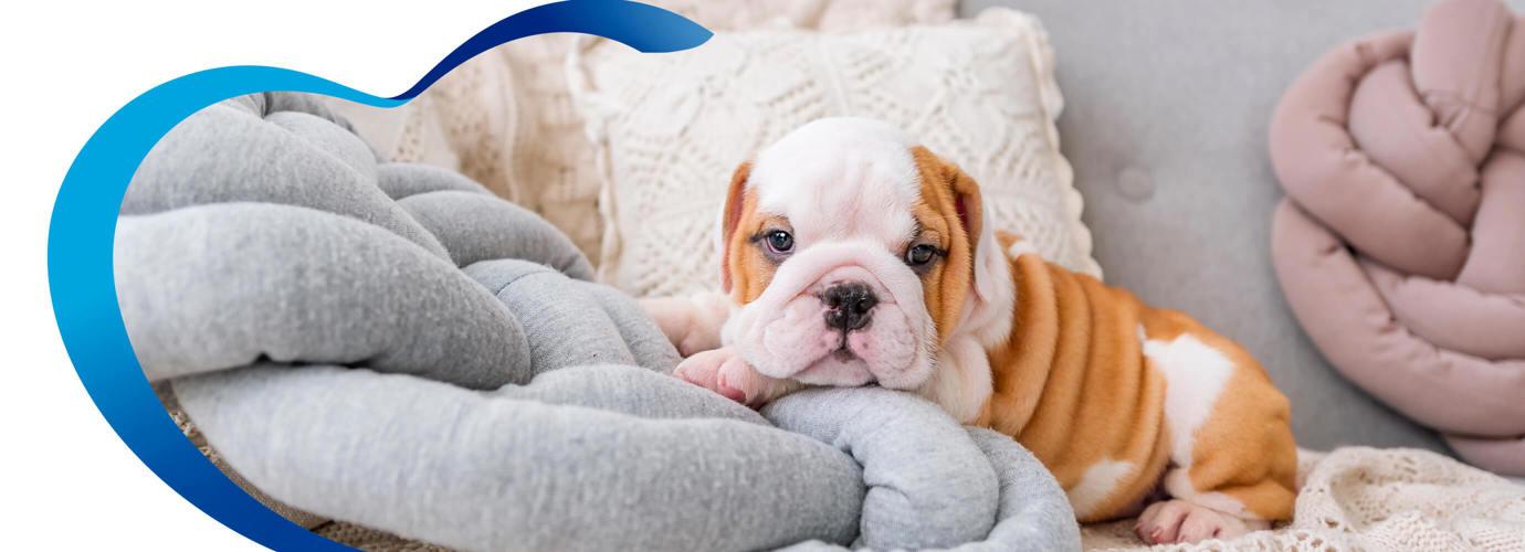 Consejos para mantener una casa con mascotas limpias