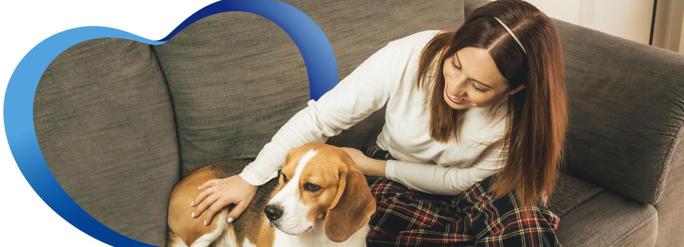 Tips sencillos para las mascotas en casa