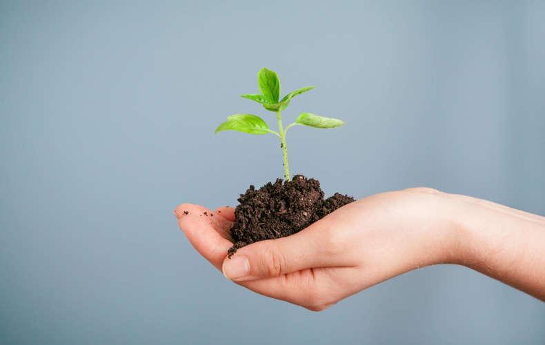 Alternativas de fibras de plantas