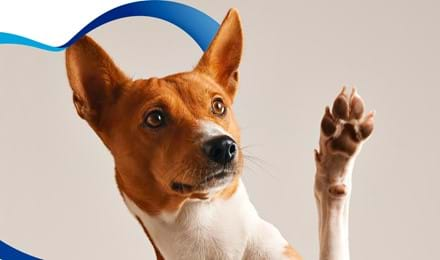 Consejos para cuidar la higiene de tu mascota después de un paseo