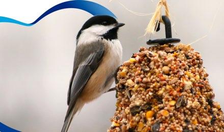 Realiza un comedero para aves con tubos de cartón de papel de baño.