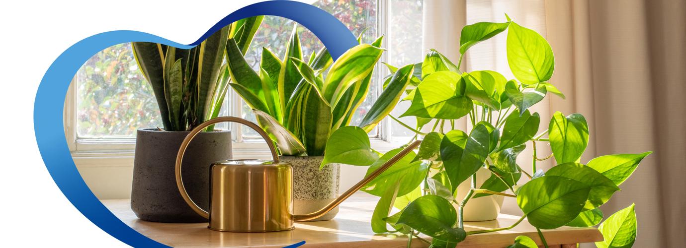 Trucos para cuidar tus plantitas de interior